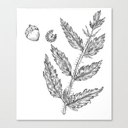 Nettles and Nutshells Canvas Print