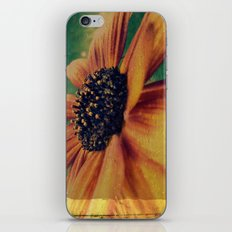 Painted Sunflower iPhone & iPod Skin