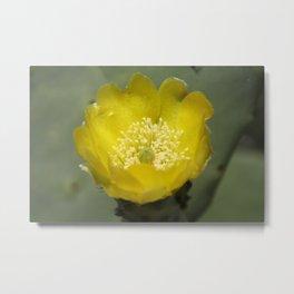 Yellow Cactus Pear Flower Metal Print