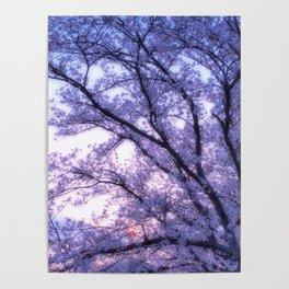 Periwinkle Lavender Flower Tree Poster