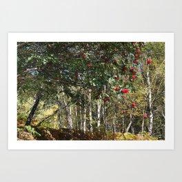 Wandering among the Rowan Art Print