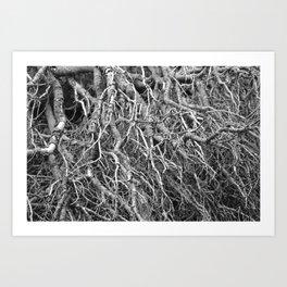 Pine Tree - M Art Print