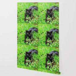 Green Eyes Wallpaper