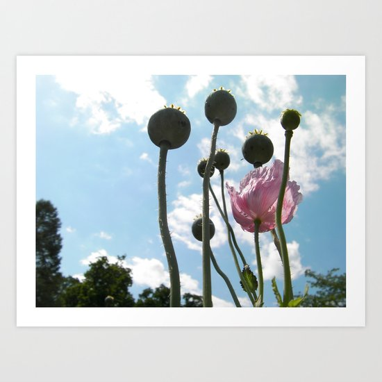 Poppies in the Sky Art Print