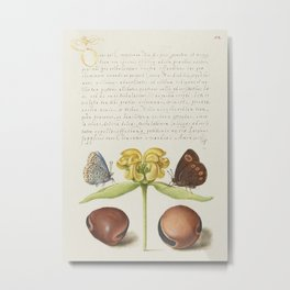 Moths Jerusalem Sage and Beans from Mira Calligraphiae Monumenta or The Model Book of Calligraphy (1 Metal Print