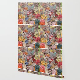 Clown fish and Sea anemones Wallpaper