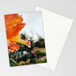Orange Roses After the Rain Stationery Cards