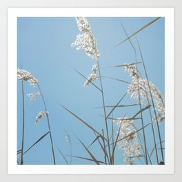 Swaying with the Tall Grass Art Print