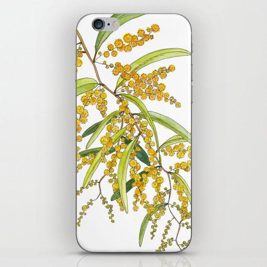 Australian Wattle Flower, Illustration by jrosedesign