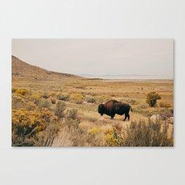 Bison Bull on Antelope Island Canvas Print