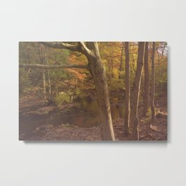 New England Fall Woods Metal Print