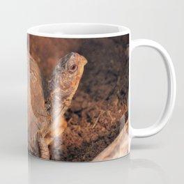 Pampered Turtle Coffee Mug
