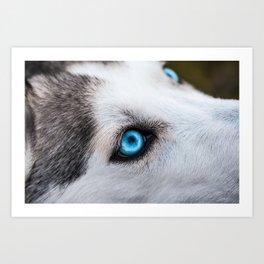 Siberian Husky Eyes (Color) Art Print