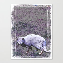 Cautious cat wary of stranger ... me! Canvas Print