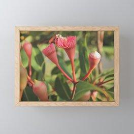 Pink gumnut blossoms 5  Framed Mini Art Print