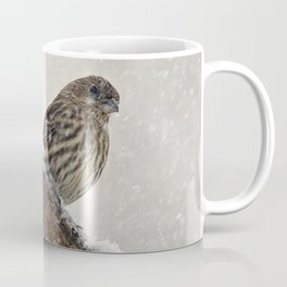 Facing the Storm (House Finch) Coffee Mug