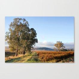 Barossa Valley Autumn Sunshine Canvas Print