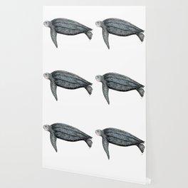 Leatherback turtle (Dermochelys coriacea) Wallpaper
