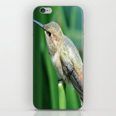 Chirp, Chirp iPhone & iPod Skin