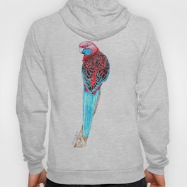 Blue Tail Parrot- The Pose Hoody