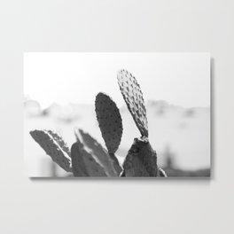 Wild Cactus <> monochrome Metal Print