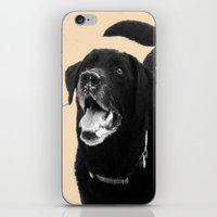 labrador iPhone & iPod Skins featuring Labrador Happy by Jennifer Warmuth Art And Design