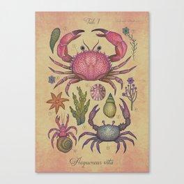 Aequoreus vita I / Marine life I Canvas Print