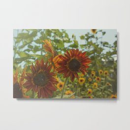 Red Sunflower Metal Print