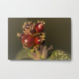 Sunny red berries Metal Print