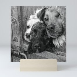 Who, who, who?  Who let the dogs out? humorous black and white photography - photographs Mini Art Print