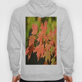Fall Autumn Maple Leaves Red Orange Autumnal Colors Hoody