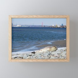 Baby Harbour Seal Sunning Itself Framed Mini Art Print