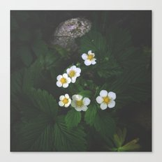 Strawberry Blossoms Canvas Print