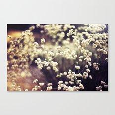Baby's Breath 2 Canvas Print