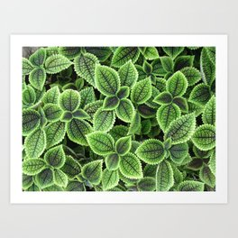 Beautifully textured green leaves Art Print