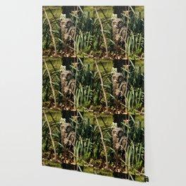 Among the daffodils Wallpaper