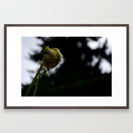 Dalia II Framed Art Print