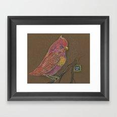 Vivid Bird Framed Art Print