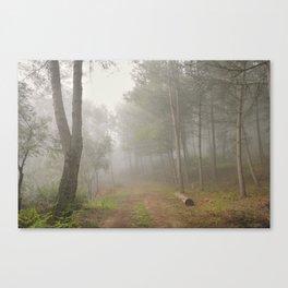 Dream forest. Into the foggy woods. Sierras de Cazorla Canvas Print