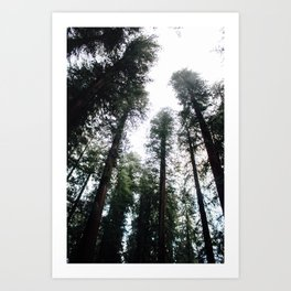 Redwoods pt. 2 Art Print