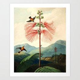 Large flowering sensitive plant. Art Print