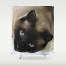 Siamese Soulful Expression Shower Curtain