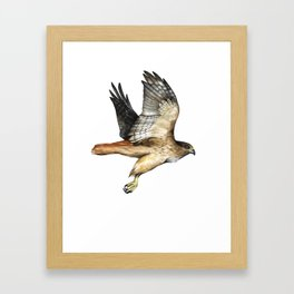 Red Tail Hawk in Flight Watercolor Framed Art Print