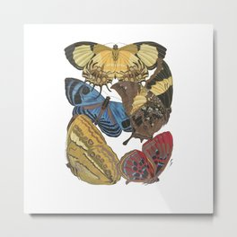 Papillions...aka Butterflies Metal Print