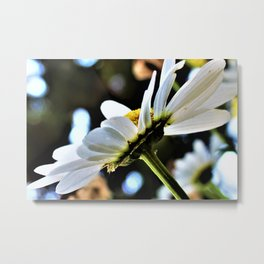 Flower No 4 Metal Print