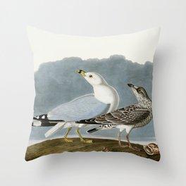 Vintage Seagull Illustration - Audubon Throw Pillow