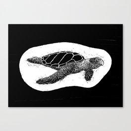 philipp martins turtle Canvas Print