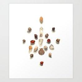Seashell Crystal Grid Art Print