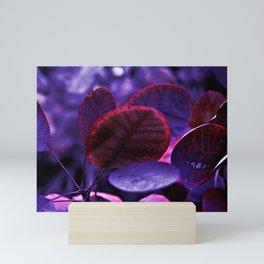 Bleeding VIOLET Smoke bush leaves Mini Art Print