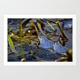 Blue Frogs 09 - Rana arvalis Art Print